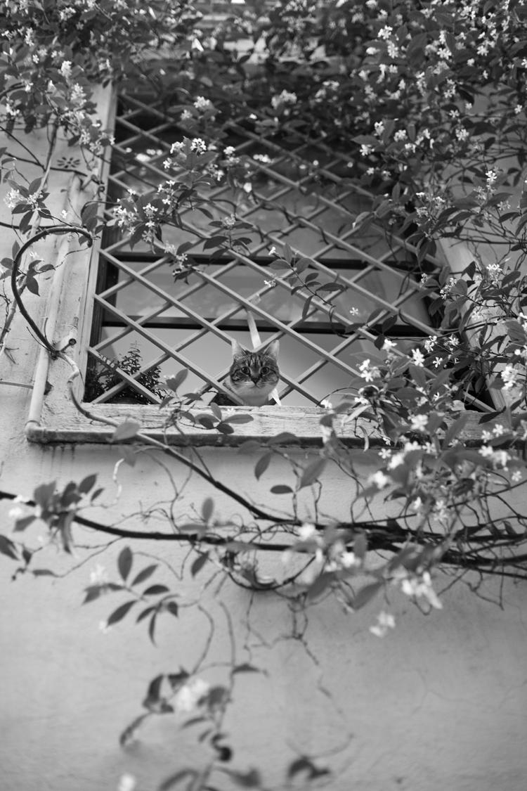 cat in Rome